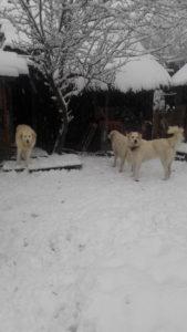 Naša ochranka miluje zimu